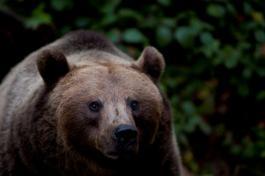 Hmm, als papa beer je aankijkt verdwijnt de zin om te aaien.