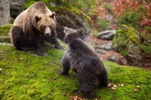 Moeder beer en kind